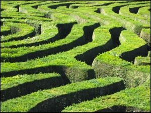 Longleat Maze by Flickr user: ant.photos (CC BY-NC-ND 2.0)