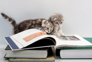 cats are reading a book (c) Catunes/Flickr